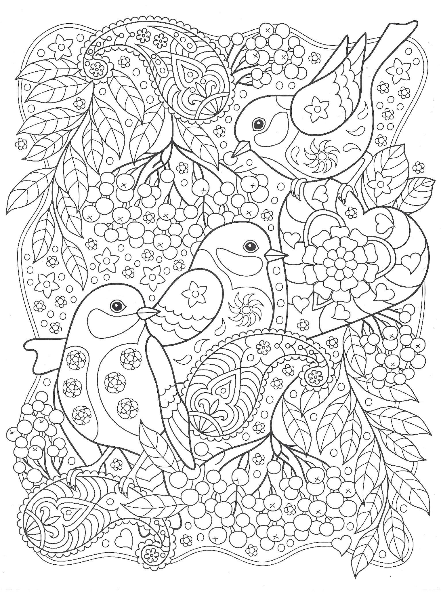 птицы с рябиной птицы раскраски антистресс