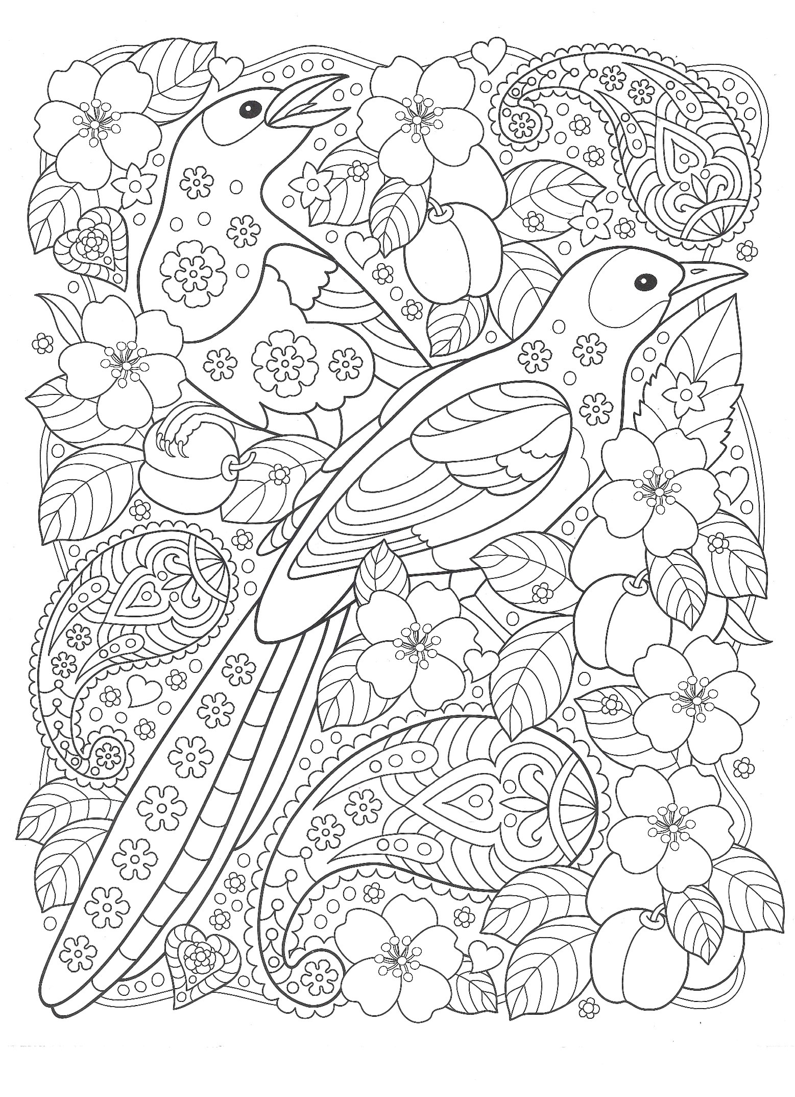 птицы с цветами птицы раскраски антистресс