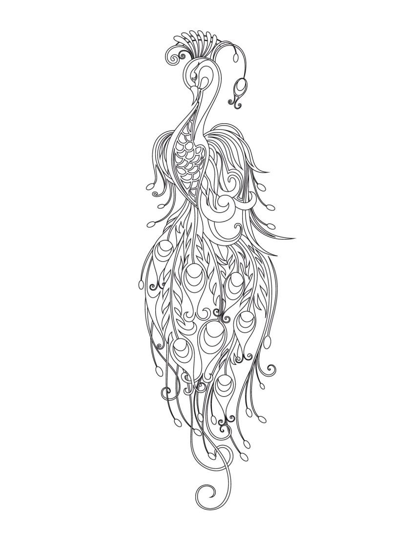 павлин птицы раскраски антистресс