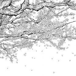 Дерево цветущая сакура