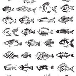 Маленькие разные рыбки