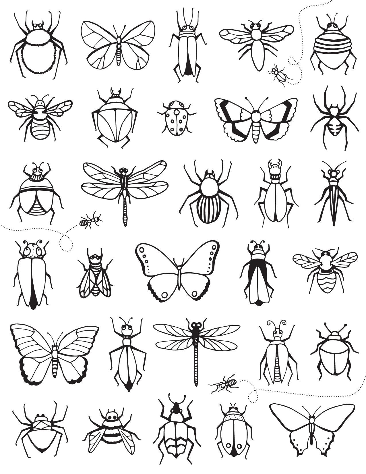 Много разных насекомых - бабочки, жуки, кузнечики, пауки ...