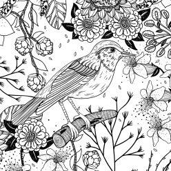 Птичка Кукушка на ветке в саду