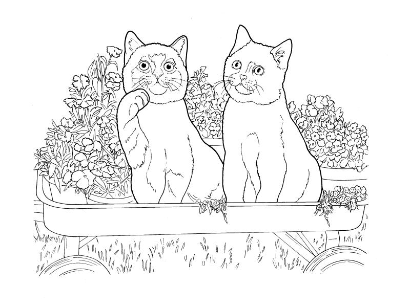 Раскраски сложные для взрослых антистресс «Британская короткошерстная кошка», чтобы распечатать