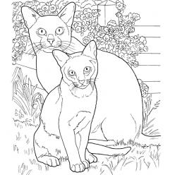 Раскраски сложные для взрослых антистресс «Коты породы Бурма», чтобы распечатать