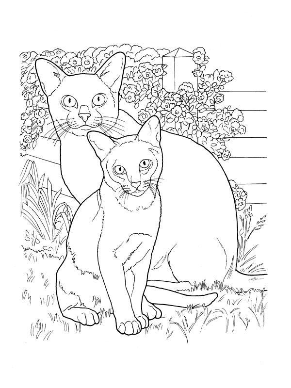 коты породы бурма животные раскраски антистресс