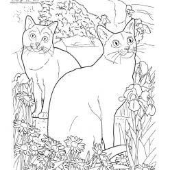 Раскраски сложные для взрослых антистресс «Коты породы Корат», чтобы распечатать