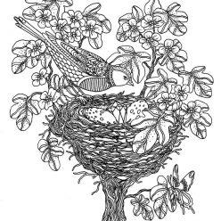 Раскраски антистресс «Птица над гнездом», чтобы распечатать