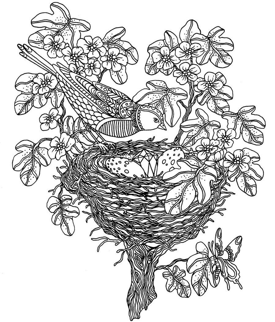 Ptica Nad Gnezdom Pticy Raskraski Antistress