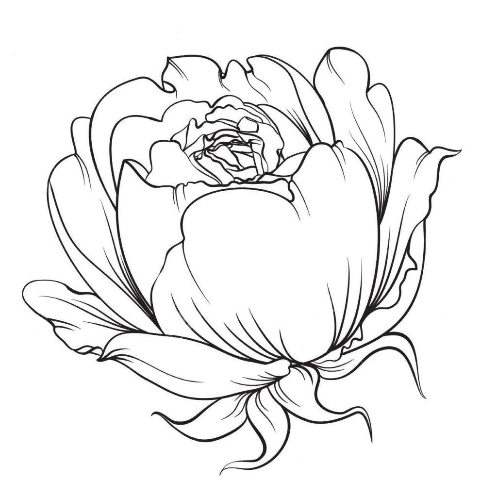 Бутон розы - Цветы - Раскраски антистресс
