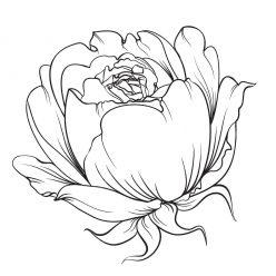 Раскраски антистресс цветы хорошего качества «Бутон розы», чтобы распечатать
