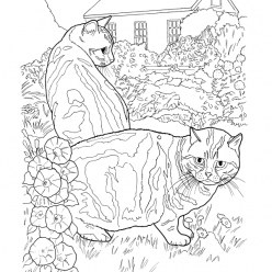 Раскраски антистресс «Британская короткошёрстная кошка», чтобы распечатать