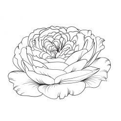 Раскраски антистресс хорошего качества «Распущенный бутон розы», чтобы распечатать