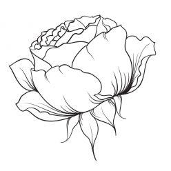 Раскраски антистресс хорошего качества «Силуэт розы», чтобы распечатать