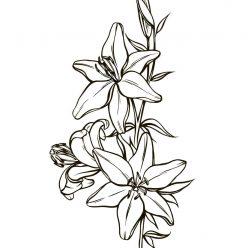 Раскраски антистресс цветы хорошего качества «ветка лилии», чтобы распечатать