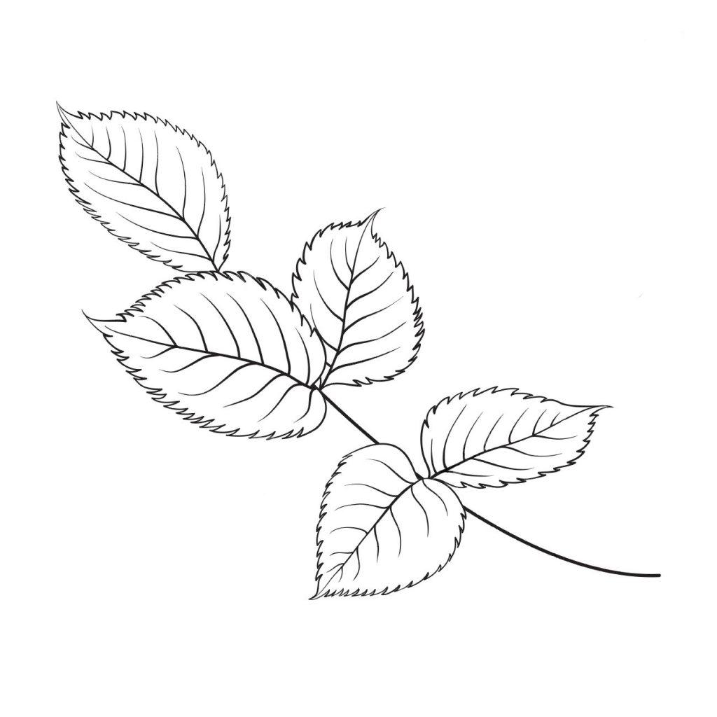 Раскраски антистресс хорошего качества «Ветка листьев розы», чтобы распечатать