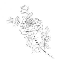 Раскраски антистресс хорошего качества «Веточка из 3 роз», чтобы распечатать