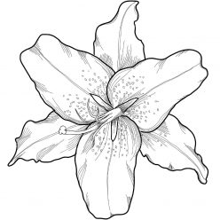 Раскраски антистресс хорошего качества «Цветок лилии», чтобы распечатать