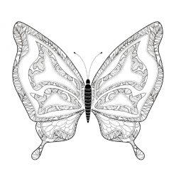 Раскраска арт терапия насекомые «Бабочка редкая», чтобы распечатать бесплатно и раскрасить