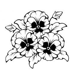 Раскраски цветы «Фиалки», чтобы распечатать