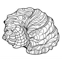 Раскраска для взрослых и детей океан «Большая морская ракушка», чтобы распечатать