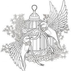 Раскраска для взрослых птицы «Свадебные голуби», чтобы распечатать
