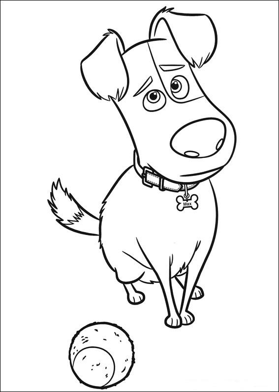 Картинки из мультфильма «Тайная жизнь домашних животных» Макс, чтобы бесплатно распечатать