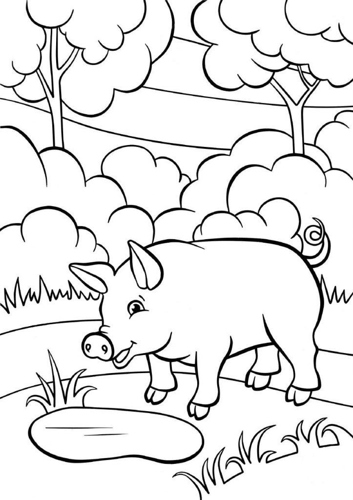 Раскраски животных для детей «Свинья», чтобы распечатать и раскрасить