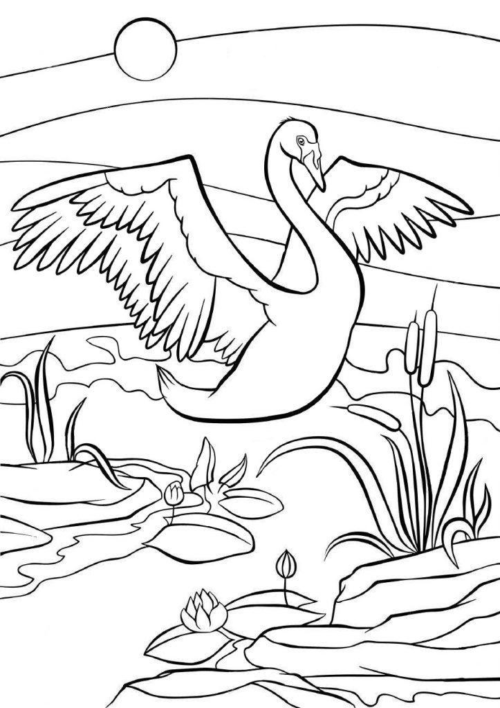 Раскраски животных для детей «Лебедь», чтобы распечатать и раскрасить