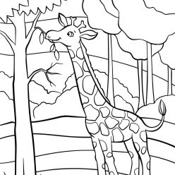 Раскраски животных для детей «Жираф», чтобы распечатать и раскрасить