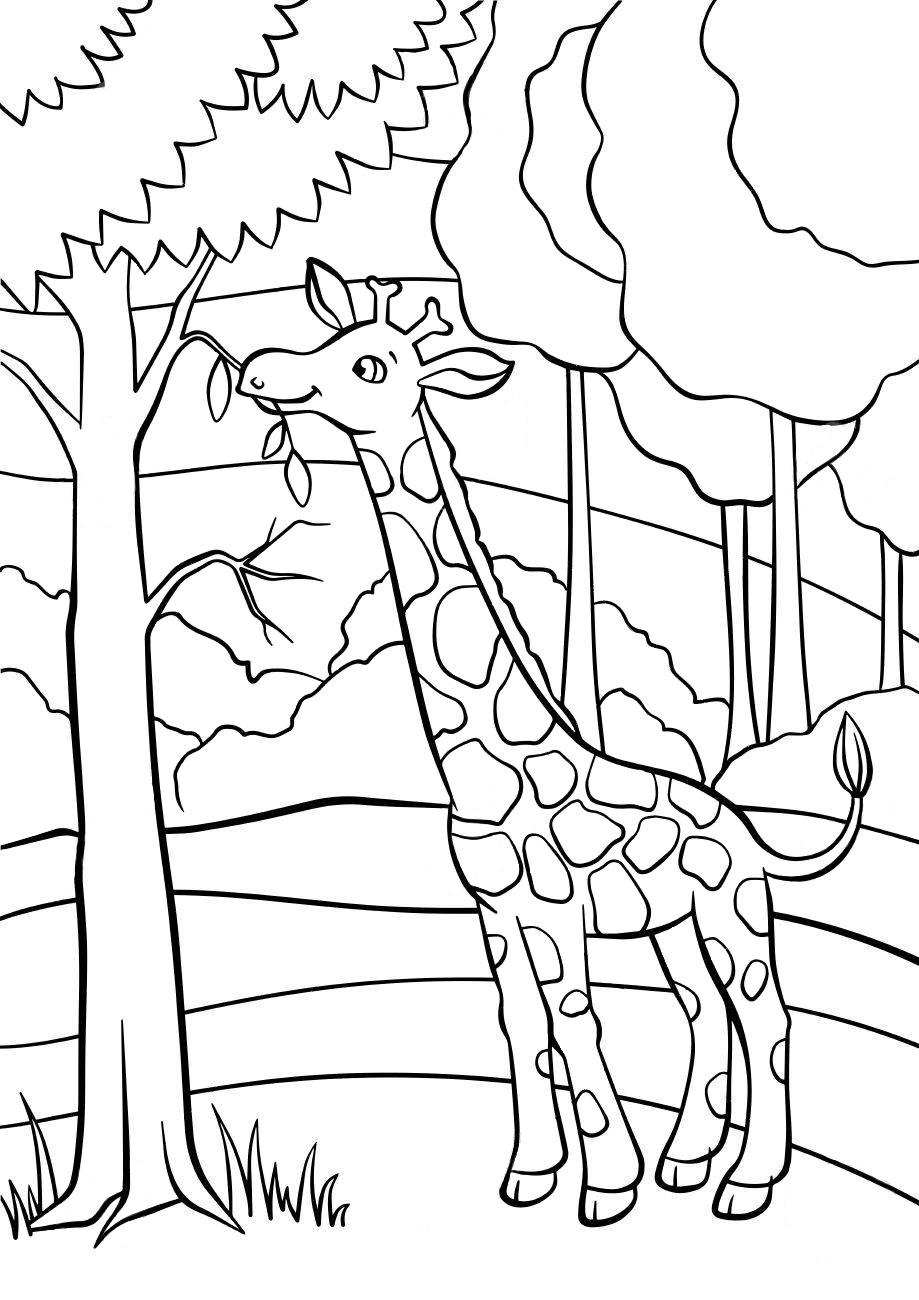 Жираф - Животные - Раскраски антистресс