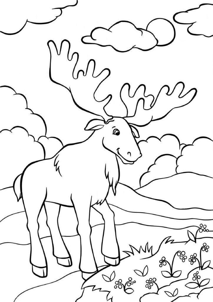 Раскраски животных для детей «Лось», чтобы распечатать и раскрасить