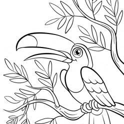 Раскраски животных для детей «Тукан», чтобы распечатать и раскрасить