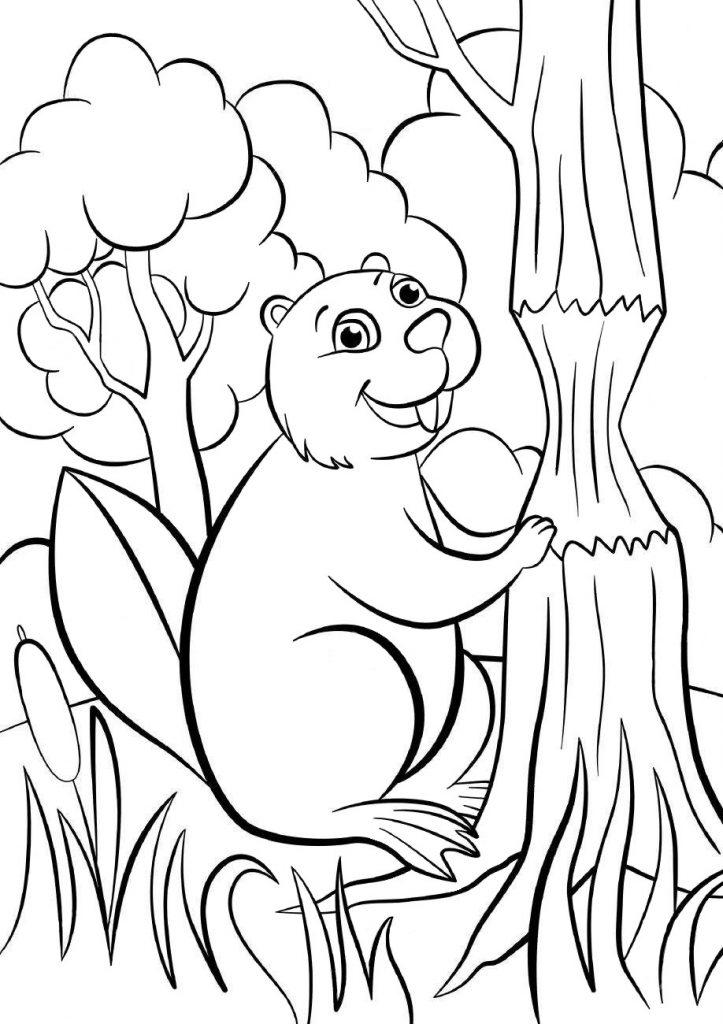 Раскраски животных для детей «Бобер», чтобы распечатать