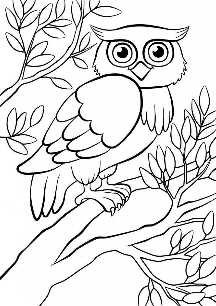 Раскраски животных для детей «Филин», чтобы распечатать и раскрасить