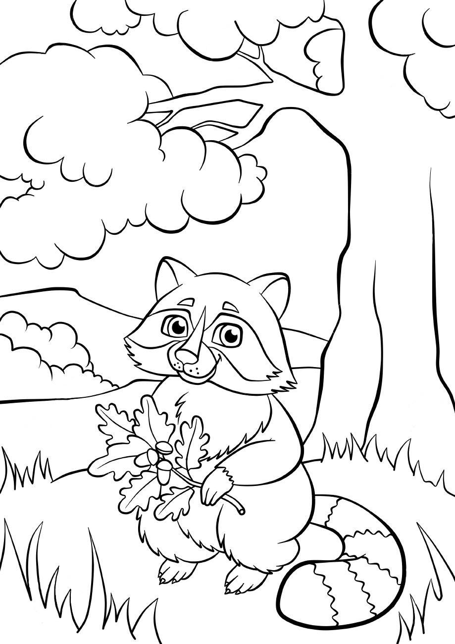 Енот с веточкой дуба - Животные - Раскраски антистресс