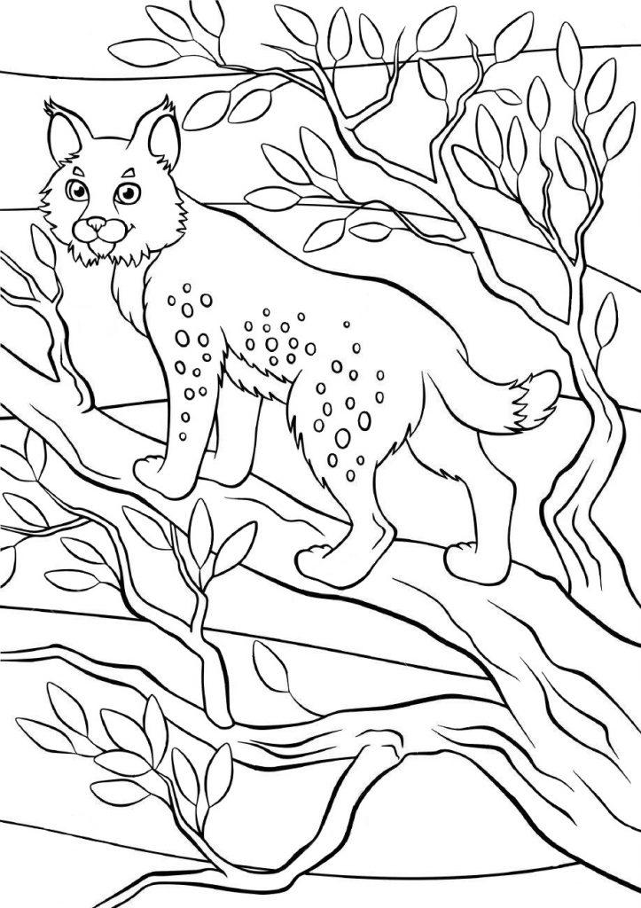Раскраски животных для детей «Рысь», чтобы распечатать и раскрасить