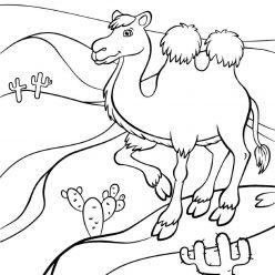 Раскраски животных для детей «Верблюд», чтобы распечатать и раскрасить