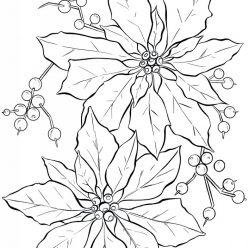 Картинка Рождественский цветок, чтобы распечатать в хорошем качестве А4