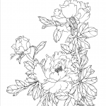 Раскраска цветы Пионы букет, чтобы распечатать в хорошем качестве А4