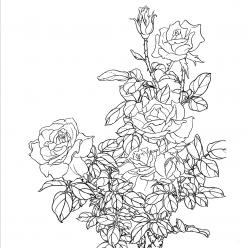 Раскраска цветы роза, чтобы распечатать в хорошем качестве А4
